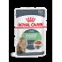 Royal Canin FHN DIGEST SENSITIVE in gravy 12x85g kassitoit